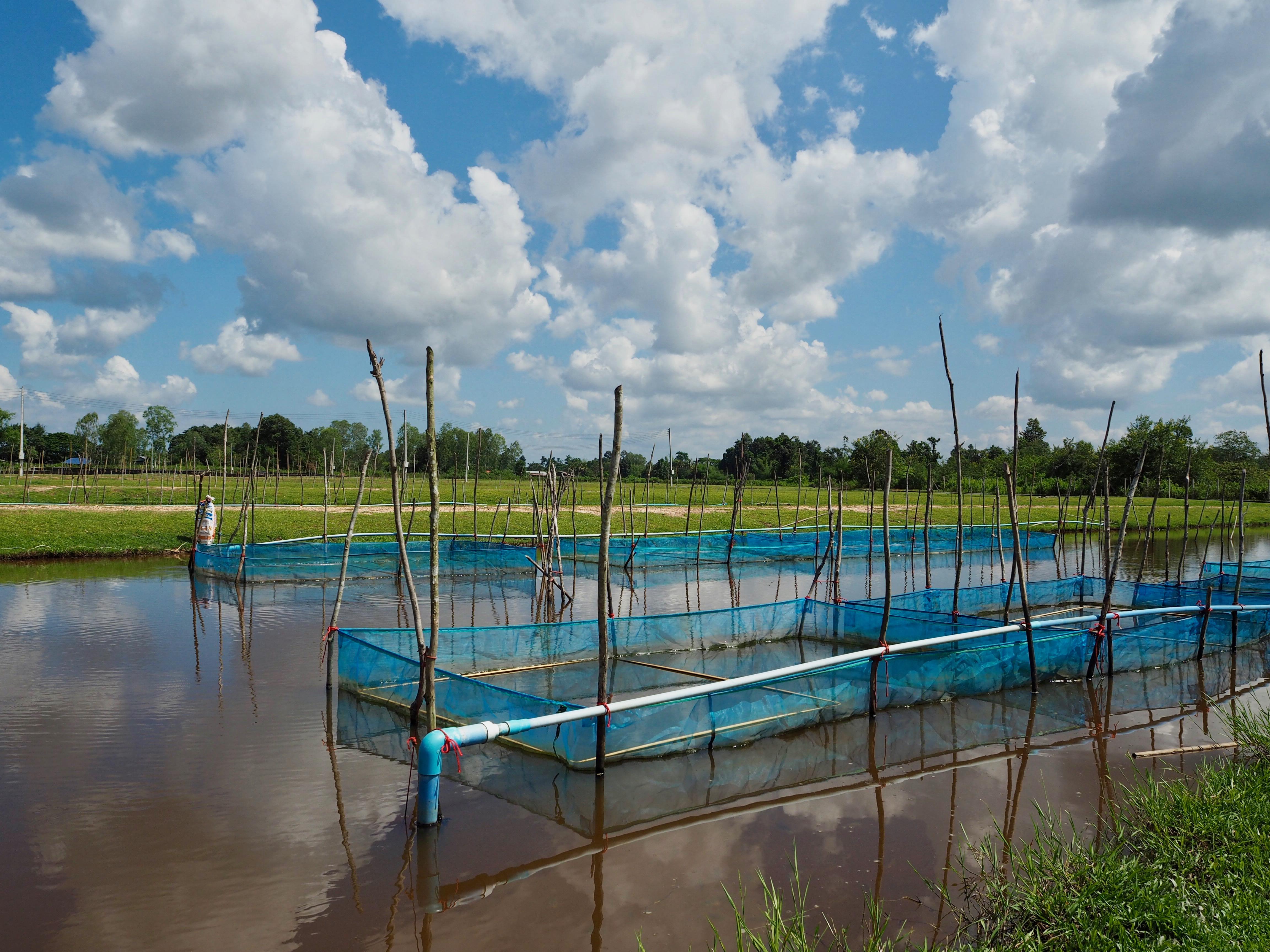 Fish-Production-Farm